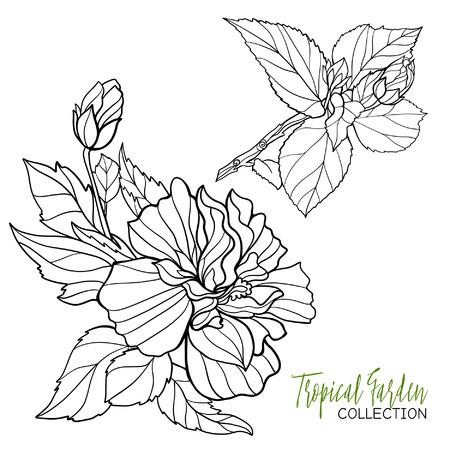 Orchidee. Tropische Pflanze. Vektor-Illustration. Malbuch Für ...