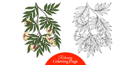Outline decorative branch with flower in vintage style.  Coloring book for adult and older children. Coloring page with sample. Vector illustration.