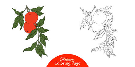 vector sample: Outline decorative branch with apple in vintage style.  Coloring book for adult and older children. Coloring page with sample. Vector illustration. Illustration