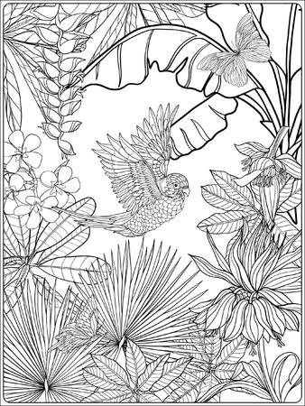 Tropical oiseaux et de plantes sauvages. collection de jardin tropical. Coloriage. livre à colorier pour les adultes et les enfants plus âgés. Outline illustration vectorielle. Banque d'images - 60088458