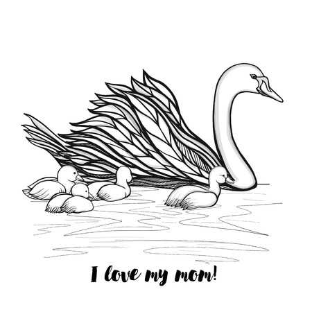 cygnet: Mother Swan with chicks  with lettering I love my mom. Vector illustration.This illustration can be used as a greeting card or as a print on T-shirts and bags.