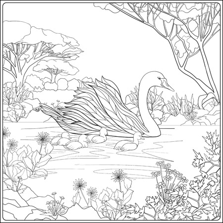Coloring book for adult and older children. Coloring page with lovely mother Swan and her little chicks in the lake garden.