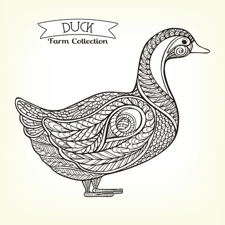 farmers market: Duck. Hand drawn decorative farm animal. Good for farmers market invitation, labels. Vector illustration. This illustration can be used as a print on T-shirts and bags.