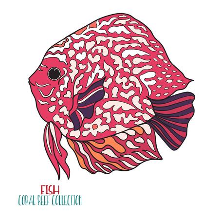 Coral reef collection. Sea or aquarium fish. Colored Vector illustration.