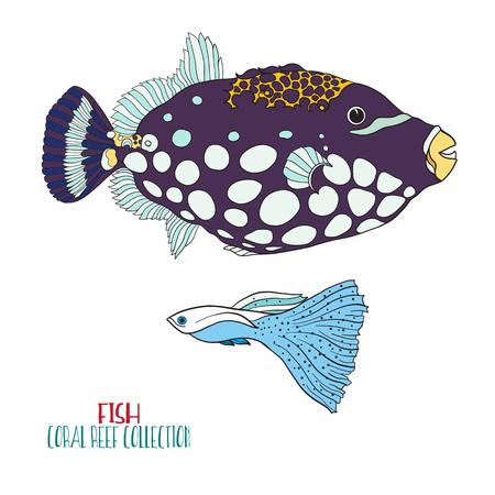 coral colored: Coral reef collection. Sea or aquarium fish. Colored Vector illustration.