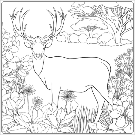 Coloring page with deer in forest. Coloring book for adult and older children. Vector illustration. Outline drawing.