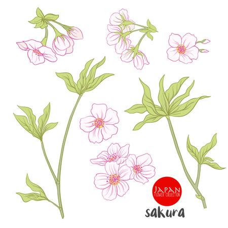 asian gardening: Branch of cherry blossoms, japanese cherry. Stock line vector illustration botanic flowers.