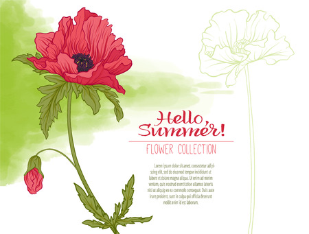 A poppy flower on a green watercolor background. The flowers in