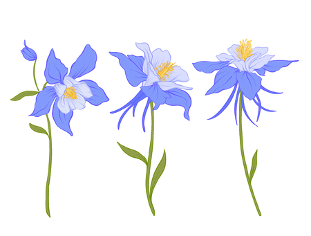 コロンバイン、オダマキ、花。  イラスト・ベクター素材