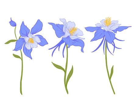 Columbine, aquilegia, bloemen. Stock Illustratie