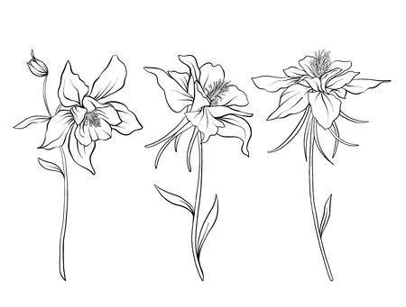 Columbine flowers. Set of outline flowers. Vectores