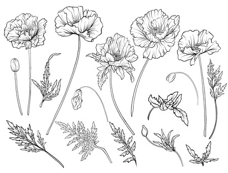Poppy flowers. Set of outline flowers. Vettoriali