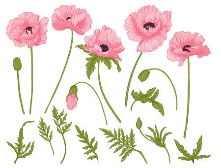 양 귀 비 꽃입니다. 색깔 된 꽃의 집합입니다.