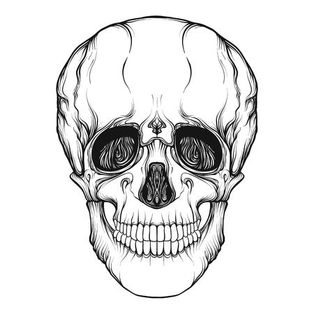 分離した人間の頭蓋骨現実的な手図面