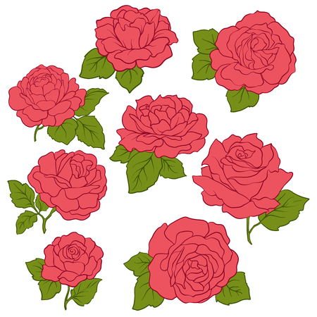 set of Isolated red roses with green leaves. Stock line vector illustration.