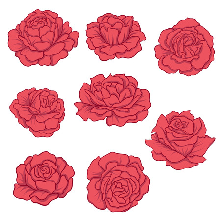 set of Isolated red roses. Stock line vector illustration. Illustration