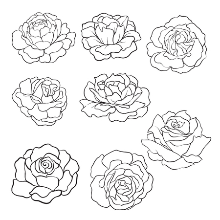set of Isolated rose. Outline drawing. Stock line vector illustration.