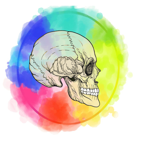 Human skull on the watercolor color circle background.