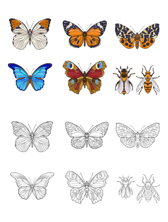 Set of colored and outline butterflies and bees.