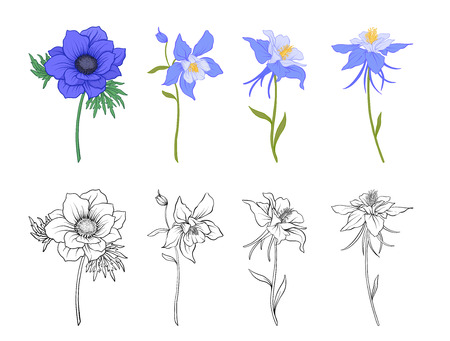Columbine, aquilegia, anemone flowers. Stock Photo