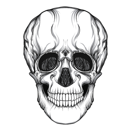 Human skull realistic hand drawing isolated Stock line vector illustration. Illustration