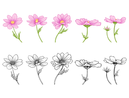 Set of colored and outline flowers Illustration