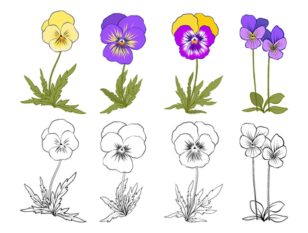 Violet flowers hand drawn