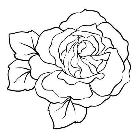 Isolated rose. Outline drawing. Stock vector illustration. Ilustração