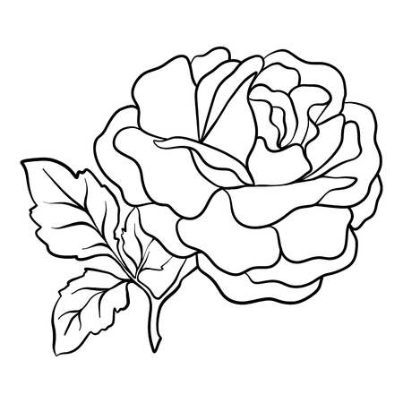 Isolated rose. Outline drawing. Stock vector illustration. Illustration