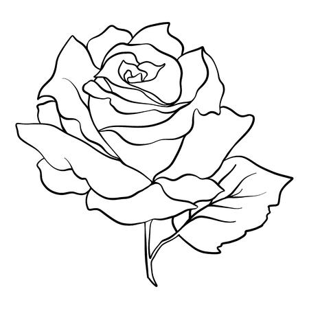 孤立したバラ。アウトライン描画。ストックベクトルイラスト。