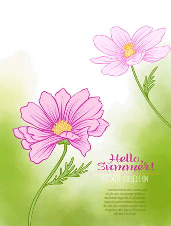 vintage postcard: A cosmos flower on a green watercolor background. The flowers in the botanical style, minimalistic design. Place for the inscription. Hello summer Stock line vector illustration. Illustration