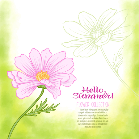 A cosmos flower on a green watercolor background. The flowers in the botanical style, minimalistic design. Place for the inscription. Hello summer Stock line vector illustration. Illustration
