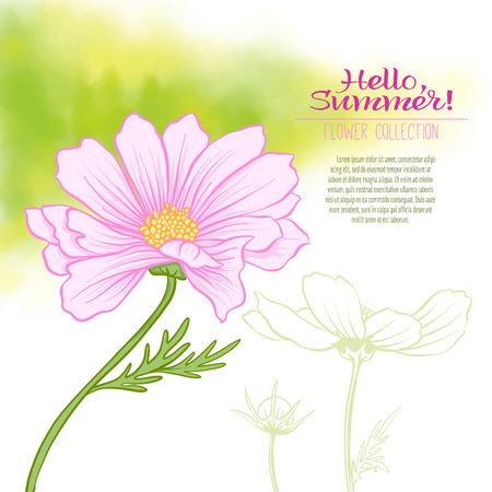 minimalistic: A cosmos flower on a green watercolor background. The flowers in the botanical style, minimalistic design. Place for the inscription. Hello summer Stock line vector illustration. Illustration