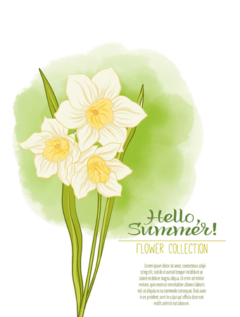 A narcissus flower on a green watercolor . The flowers in the botanical style, minimalistic design. Place for the inscription. Hello summer Stock line illustration.