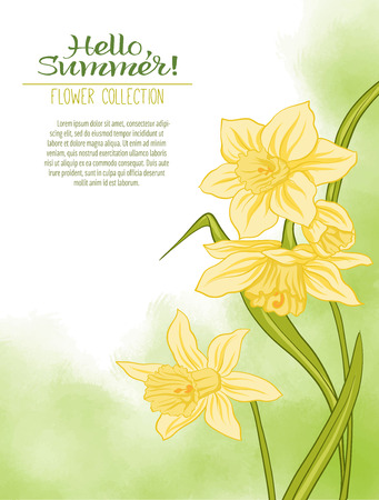 vintage postcard: A narcissus flower on a green watercolor background. The flowers in the botanical style, design. Place for the inscription. Hello summer Stock line vector illustration.