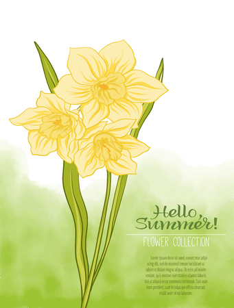 A narcissus flower on a green watercolor background. The flowers in the botanical style, minimalistic design. Place for the inscription. Hello summer Stock line vector illustration. Illustration