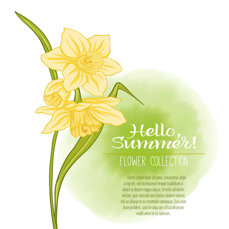 vintage postcard: A narcissus flower on a green watercolor background. The flowers in the botanical style, minimalistic design. Place for the inscription. Hello summer Stock line vector illustration. Illustration