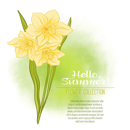 A narcissus flower on a green watercolor background.