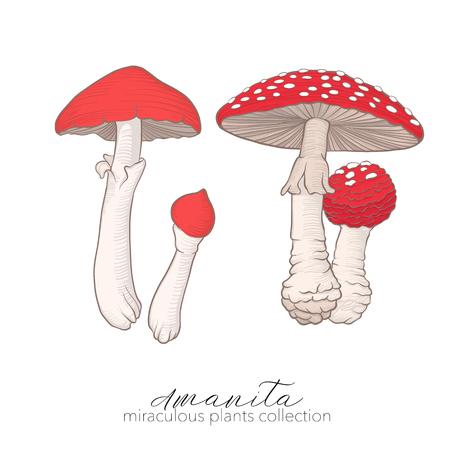 Miraculous plant. Amanita mushroom. Ilustrace