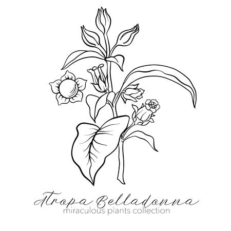 Belladonna plant set. Outline vector illustration. Ilustração