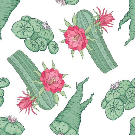 Seamless pattern and background with echinopsis. Stock vector il Çizim