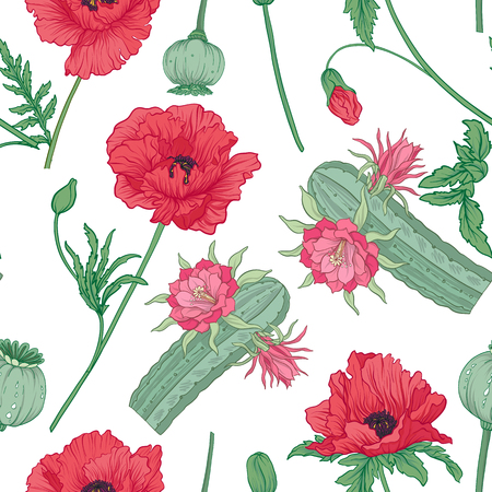 Seamless pattern and, background with red opium poppy and echino
