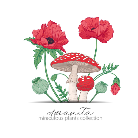 Opium poppy and amanita mushroom. Set of miraculous plants in bo Çizim