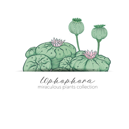 Opium poppy and ophophora. Set of miraculous plants in botanical