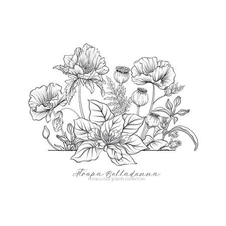 ケシ、ベラドンナ、マンドラゴラ。奇跡的な植物のセット