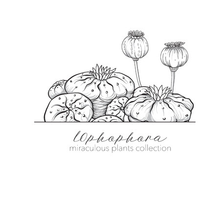 Opium poppy and ophophora. Set of miraculous plants in botanical, adult coloring book. Reklamní fotografie - 86756270