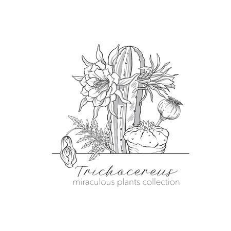 아편 양귀비, echinopsis 및 ophophora. 기적의 식물 세트 일러스트