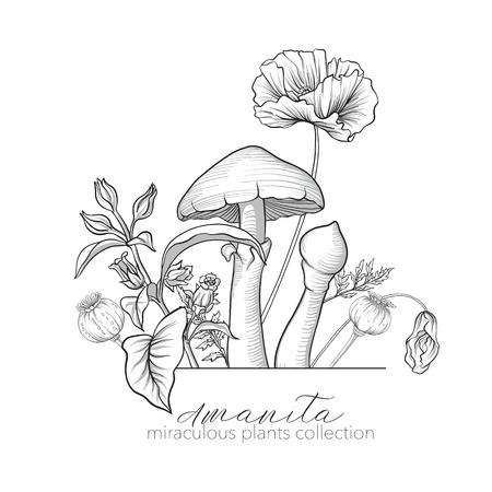 Opium papaver, belladonna en amanita paddestoel. Set van wonderbaarlijke Stockfoto - 86434523