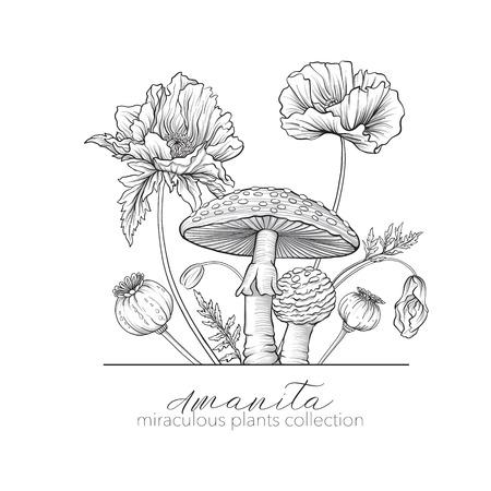 Opium poppy and amanita mushroom. Set of miraculous plants in bo Illusztráció