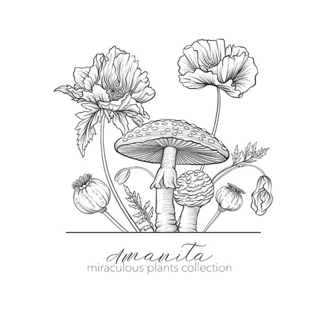 Opium poppy and amanita mushroom. Set of miraculous plants in bo Illustration